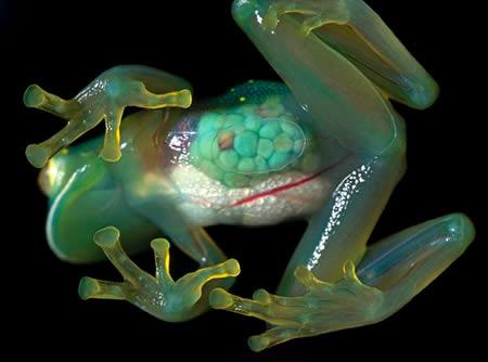 [Image: 24662_a357_frog.jpg]