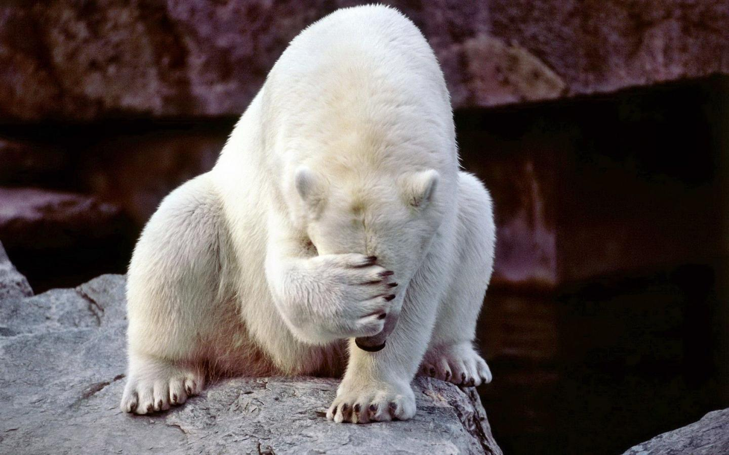 94078_Facepalm-Bear-900x1440.jpg